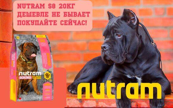 НУТР С8-2